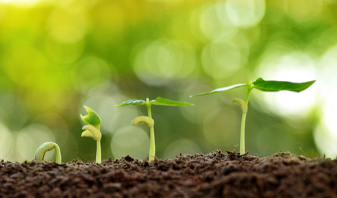 ¿Qué son los bioestimulantes?