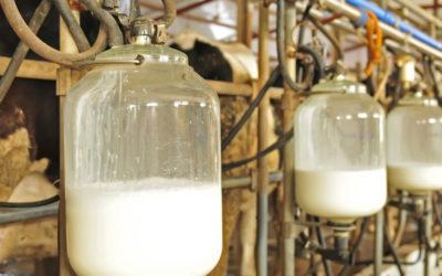 Leche cruda vs. leche tratada.