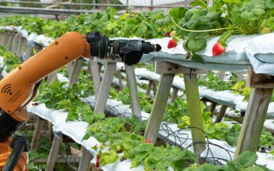 Sólo la tecnología nos permitirá alimentar una población de 10 mil millones de habitantes en 2050