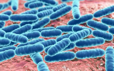 La viabilidad de los probióticos